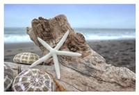 Crescent Beach Shells 6 Fine Art Print
