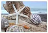 Crescent Beach Shells 7 Fine Art Print