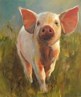 Morning Pig Fine Art Print