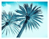 Chic Palms Fine Art Print