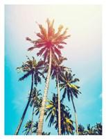 Palms in the Sun Fine Art Print