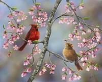 Spring Cardinals Fine Art Print