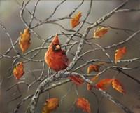Fall Cardinal Fine Art Print
