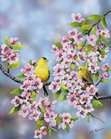 Finches In Cherry Tree Fine Art Print