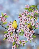Finches In Cherry Tree Fine Art Print