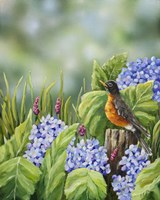 Robin With Hydrangeas Fine Art Print