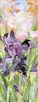 Black Iris Fine Art Print