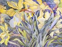 Daffodils, Van Vleck Fine Art Print