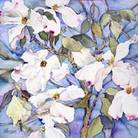 Dogwoods, White Fine Art Print