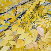 Golden Leaves Fine Art Print