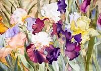 Iris Garden I Fine Art Print