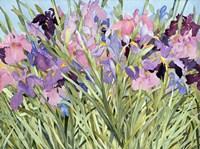 Iris Garden X Fine Art Print