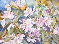 Rhododendrons Fine Art Print