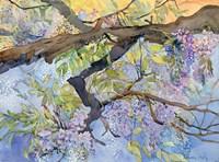 Wisteria, Van Vleck Fine Art Print