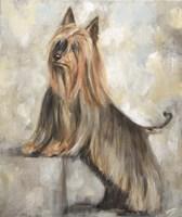 Silky Terrier II Fine Art Print