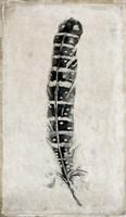 Feather 4 Fine Art Print