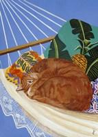 Catnapping In A Hammock Fine Art Print