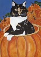 Matisse In A Pumpkin Fine Art Print