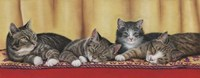 Relaxing Tabbies Fine Art Print