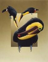 Chestnut-Mandibled Toucans Fine Art Print