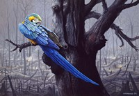 Blue And Yellow Macaw In Burned Forest Fine Art Print