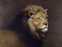 Lion Male Fine Art Print
