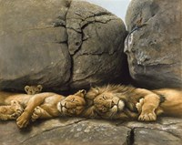 Two Lions Head To Head Fine Art Print