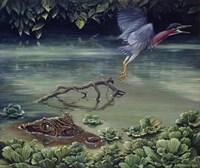 Caiman And Green-Backed Heron Fine Art Print