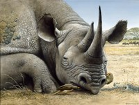 Black Rhino Fine Art Print