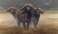 Cape Buffalos Fine Art Print