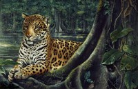Jaguar By The River Framed Print