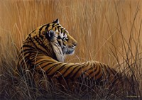 Tiger In Grass Fine Art Print