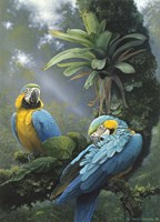 Blue And Yellow Macaws Fine Art Print