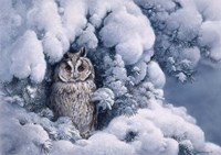 Long-Eared Owl Fine Art Print