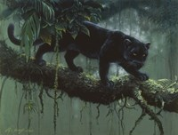Black Jaguar Fine Art Print
