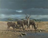 Greater Kudus Fine Art Print