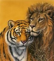 Lion & Tiger Fine Art Print