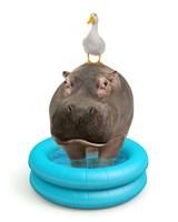 Hippo And Duck Fine Art Print