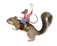 Squirrel Rodeo Fine Art Print