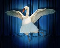 Swan Lake Fine Art Print