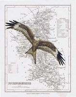 Red Kite Fine Art Print