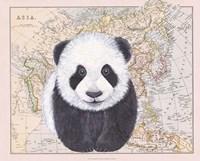 Asian Panda Fine Art Print