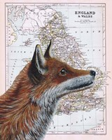 British Fox Fine Art Print