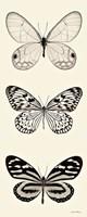 Butterfly BW Panel II Fine Art Print
