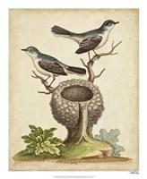 Natural Habitat II Fine Art Print