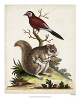 Edwards Squirrel Fine Art Print