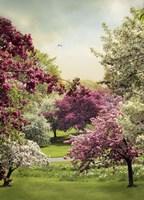 Cherry Tree Grove Framed Print