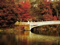 Fall at Bow Bridge Fine Art Print