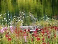 Rose Garden Impressions Fine Art Print