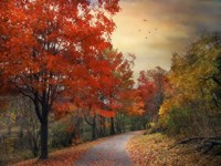 Autumn Maples Fine Art Print